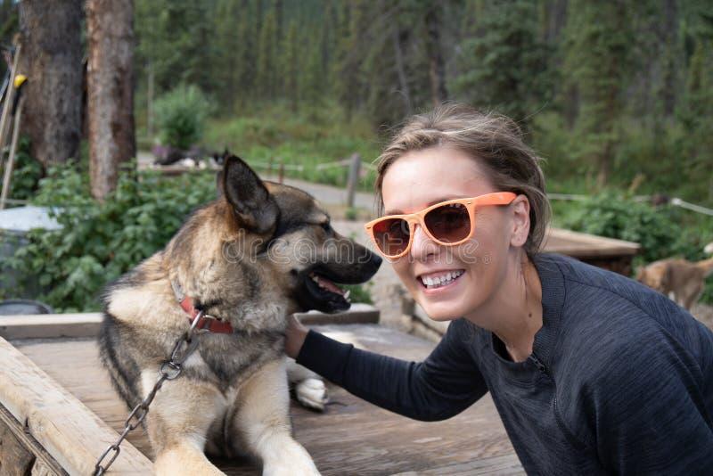 Den kvinnliga handelsresanden daltar en alaskabo skrovlig slädehund i den Denali nationalparken royaltyfri fotografi