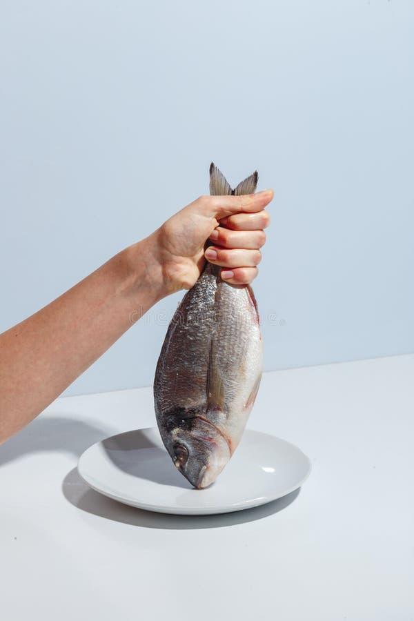 Den kvinnliga handen rymmer den rå fisken Minimalistic idérikt begrepp royaltyfri foto