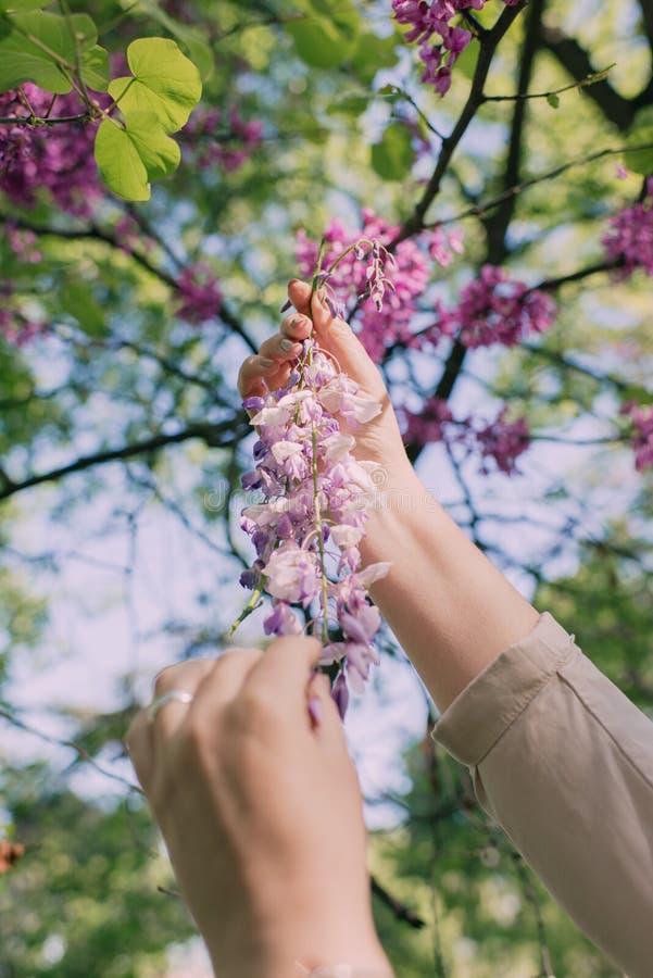 Den kvinnliga handrevan blommar från träd arkivfoto