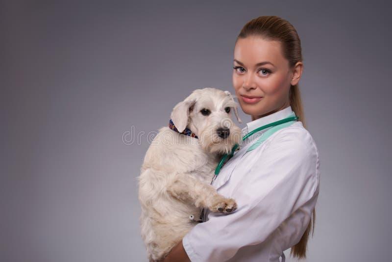 Den kvinnliga veterinären undersöker den lilla hunden royaltyfria foton