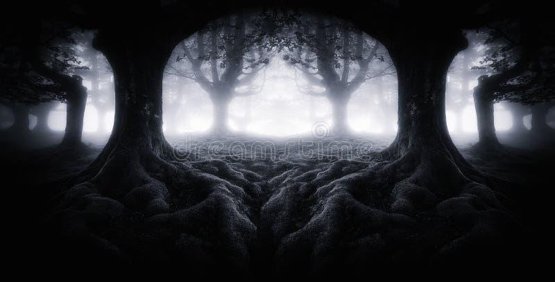 Den läskiga mörka skogen med trädet rotar royaltyfri foto