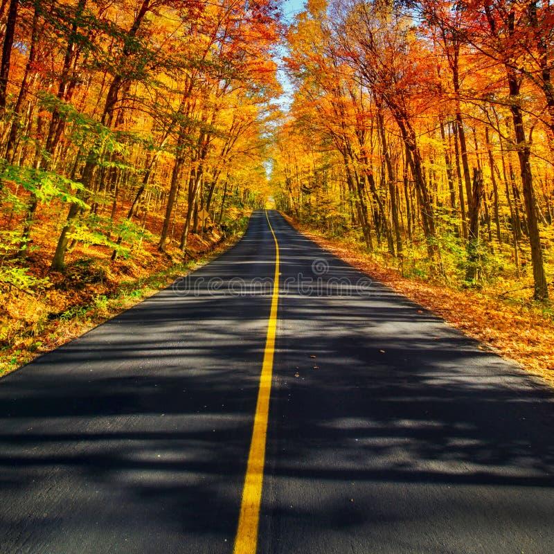 Den långa lantliga Autumn Road Corridor arkivbilder