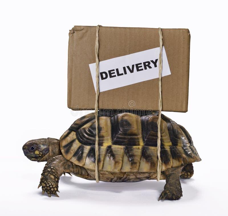 Den långsamma leveransasken på sköldpadda arkivfoto