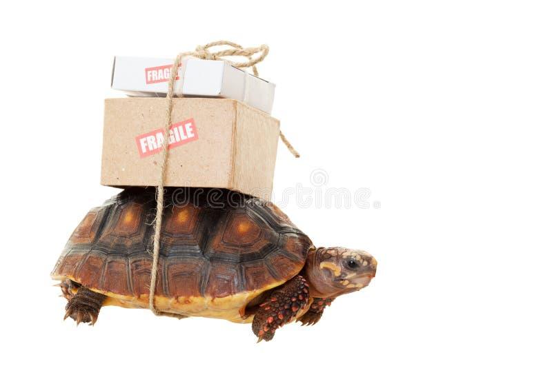 Den långsamma sköldpaddan postar royaltyfri fotografi