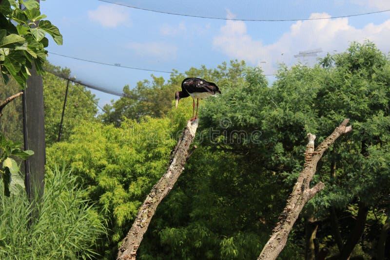 Den lösa fågeln i trädet royaltyfri bild