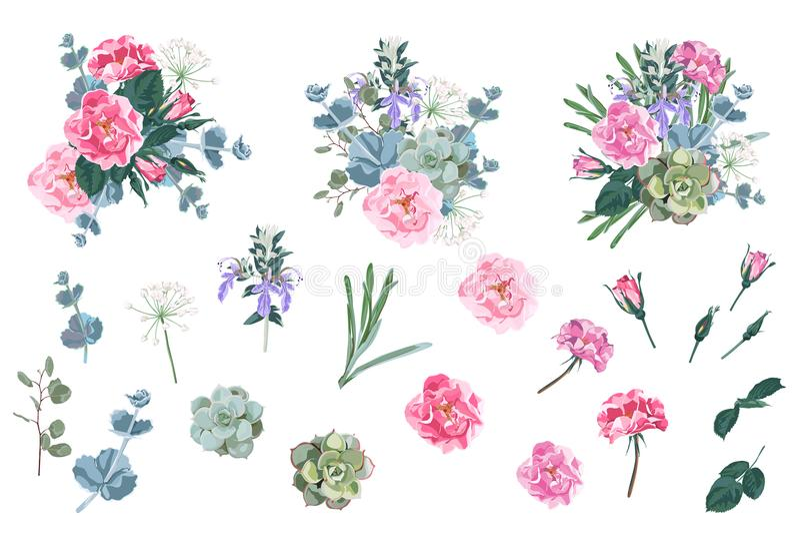 Den lösa rosa trädgården för rosen för den rosa caninahunden blommar, suckulent- och klockblommablommor och blandningen av den sä royaltyfri illustrationer