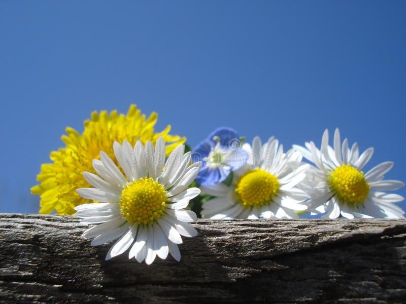 Den lösa våren blommar på träjournal, mot blå himmel royaltyfri foto