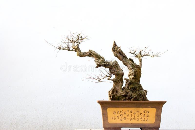 Den lade in kinesen landskap arkivfoto