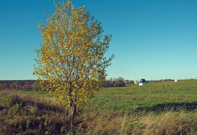 Den lantliga hösten landskap royaltyfria bilder