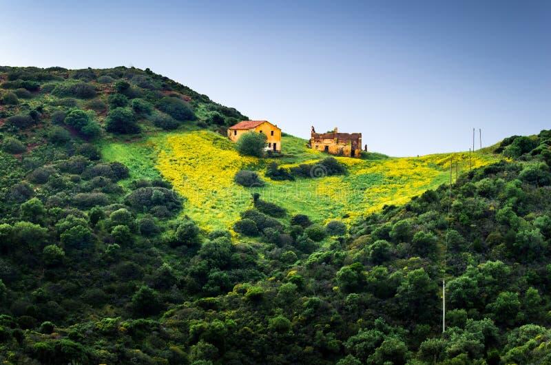 Den lantliga lantgården över en kulle med en äng och en guling blommar royaltyfri bild