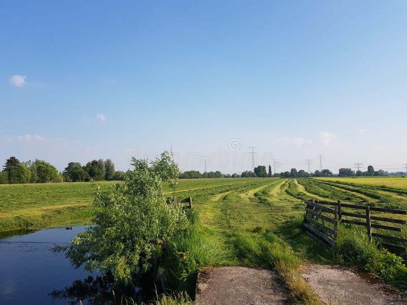 Den lantliga polderligganden med en landsväg mellan två diken och betar med staket arkivbild