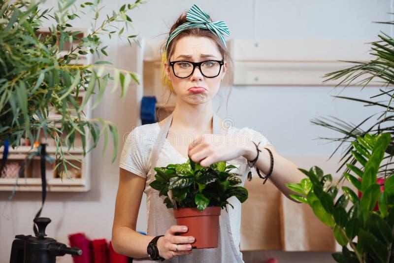 Den ledsna kvinnablomsterhandlaren som rymmer den gröna växten i blomkruka på, shoppar arkivfoton