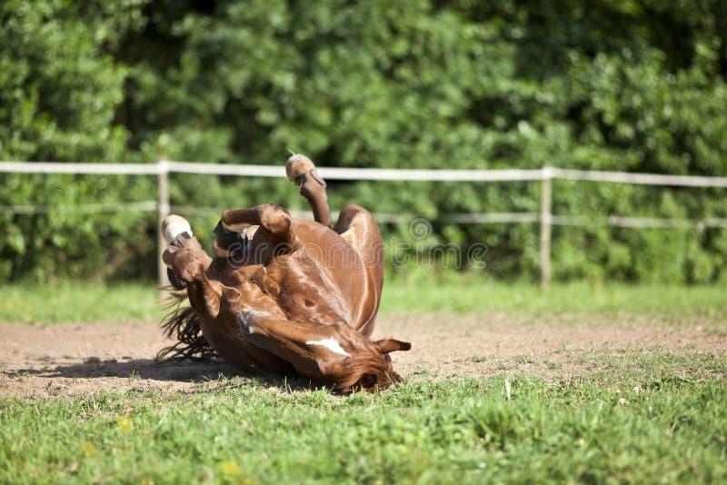 Den lekmanna- hästen och har gyckel som rullar i sand royaltyfri bild