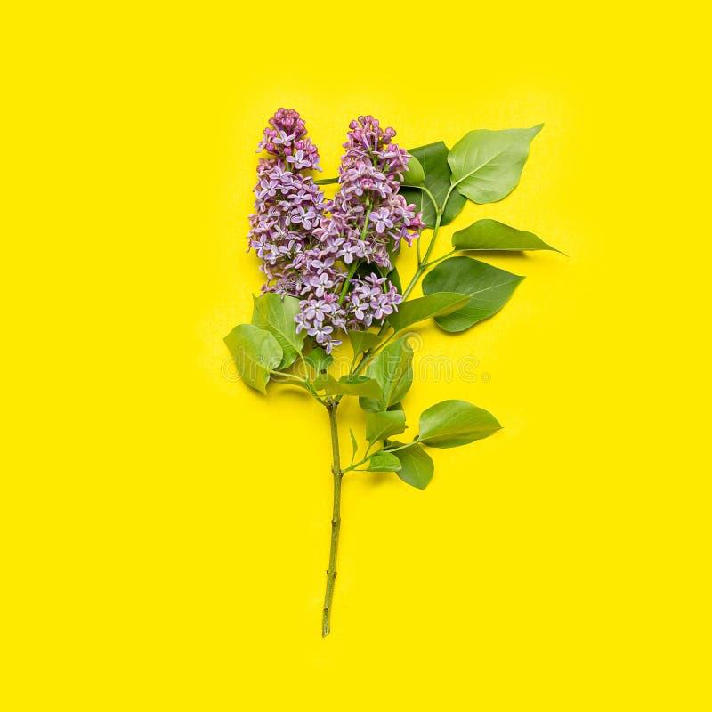 Den lila blomningen på gul bakgrundslägenhet lägger Purpurfärgade blommor med bästa sikt för sidor V?r sommar Blomma på den härli arkivbilder