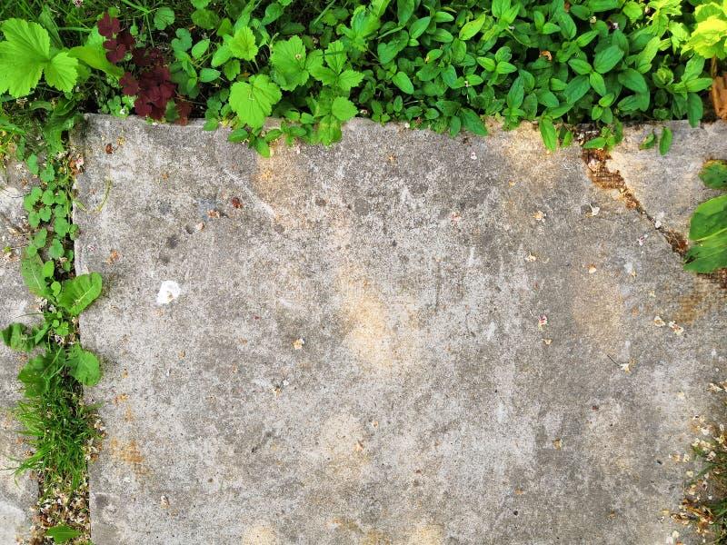 Den lilla blommagrodden v?xer till och med stads- asfaltjordning royaltyfria foton