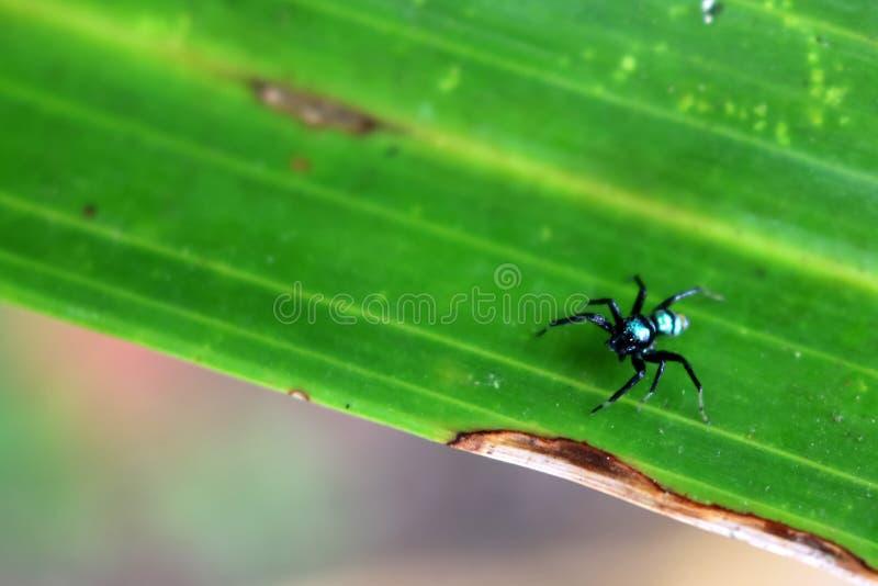 Den lilla färgrika spindelsamlingen royaltyfri foto