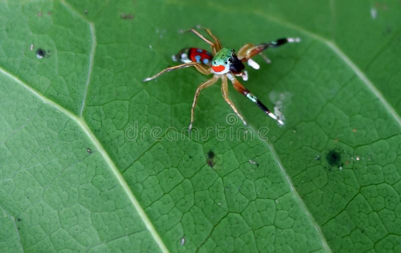 Den lilla färgrika spindelsamlingen royaltyfri bild