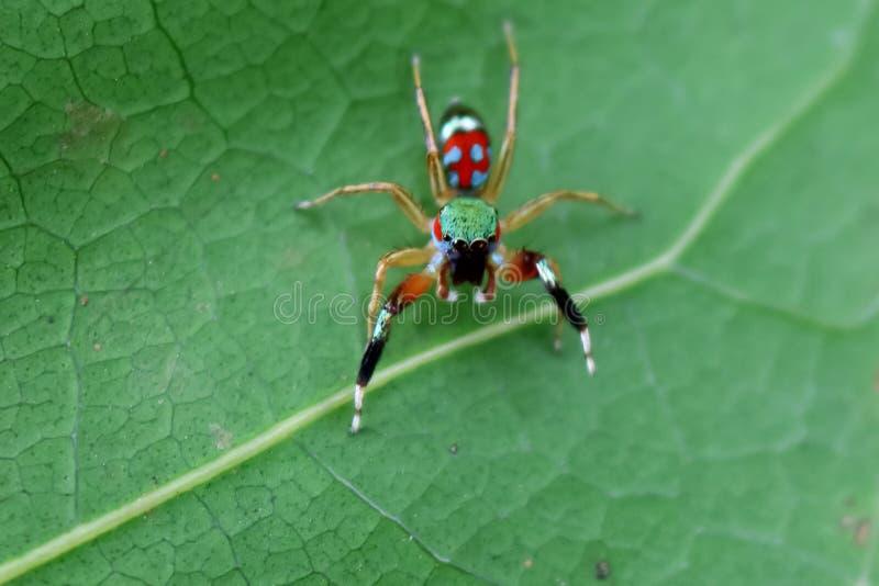 Den lilla färgrika spindelsamlingen fotografering för bildbyråer