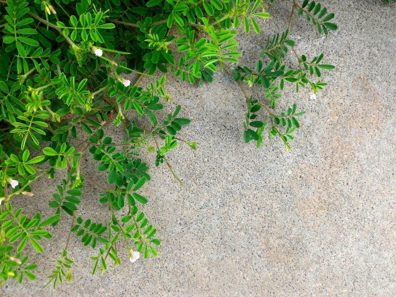 Den lilla filialen av den gröna växten och blomman på smutsig betong grundar i storstaden för naturlig bakgrund royaltyfri foto