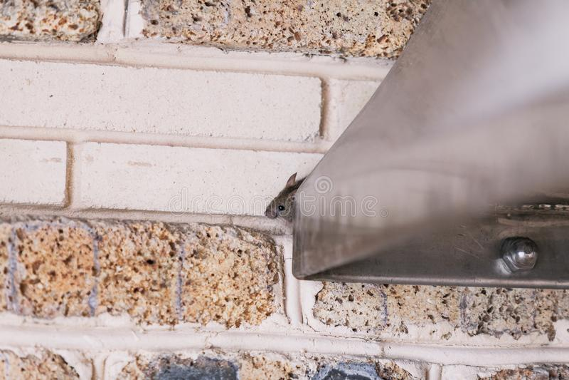 Den lilla gråa musen kryper ut ur metallkonstruktion arkivbild