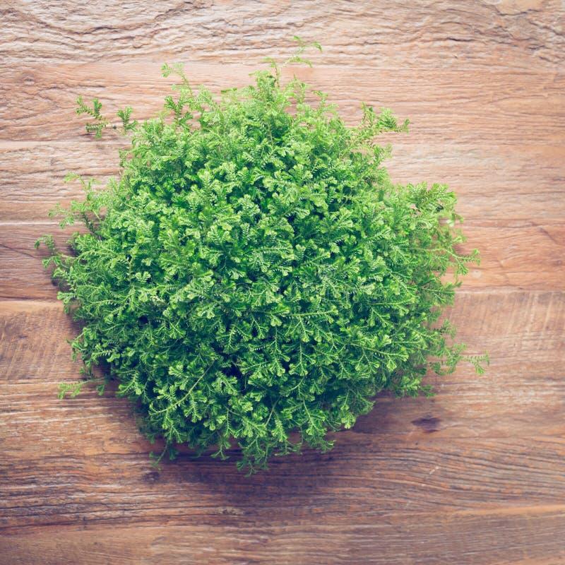 Den lilla gröna busken dekorerade inre på den bruna trätabellen arkivbilder