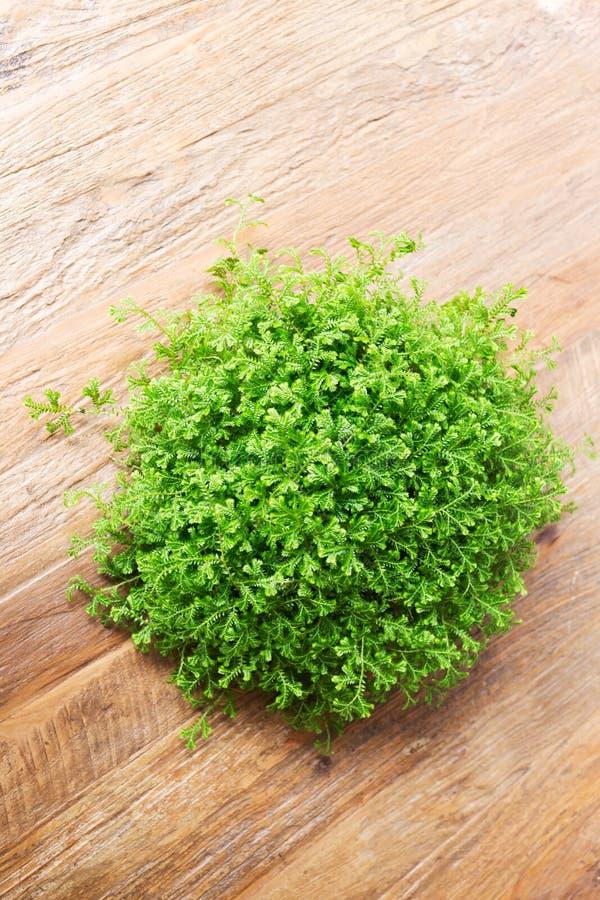 Den lilla gröna busken dekorerade inre på den bruna trätabellen arkivbild