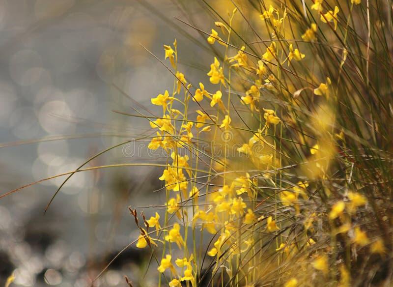 Den lilla gula blommajordningen royaltyfria foton