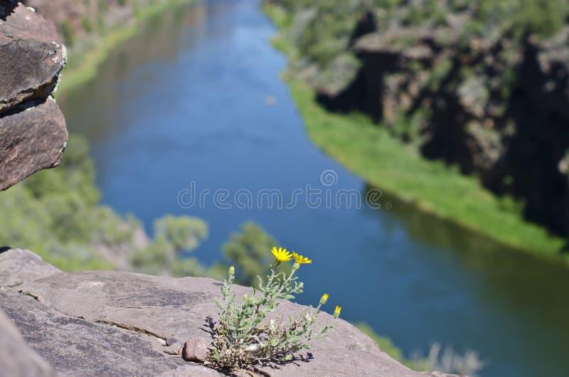 Den lilla gula blommaklippasidan royaltyfria foton
