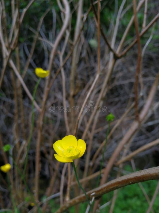 Den lilla gula blomman arkivbild