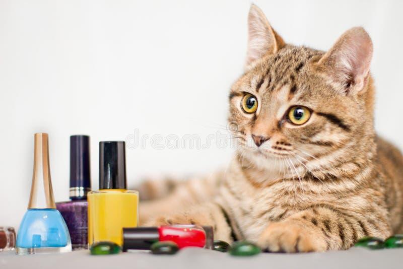 Den lilla katten gör en manikyr royaltyfri bild