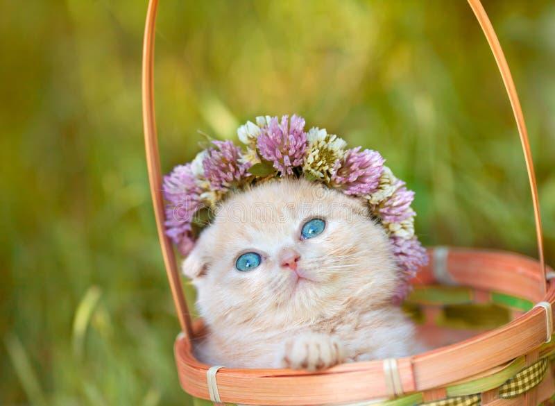 Den lilla kattungen krönade med en chaplet av växt av släktet Trifolium arkivbilder