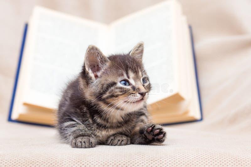 Den lilla kattungen ligger nära den öppna boken Vila under training_ royaltyfria bilder