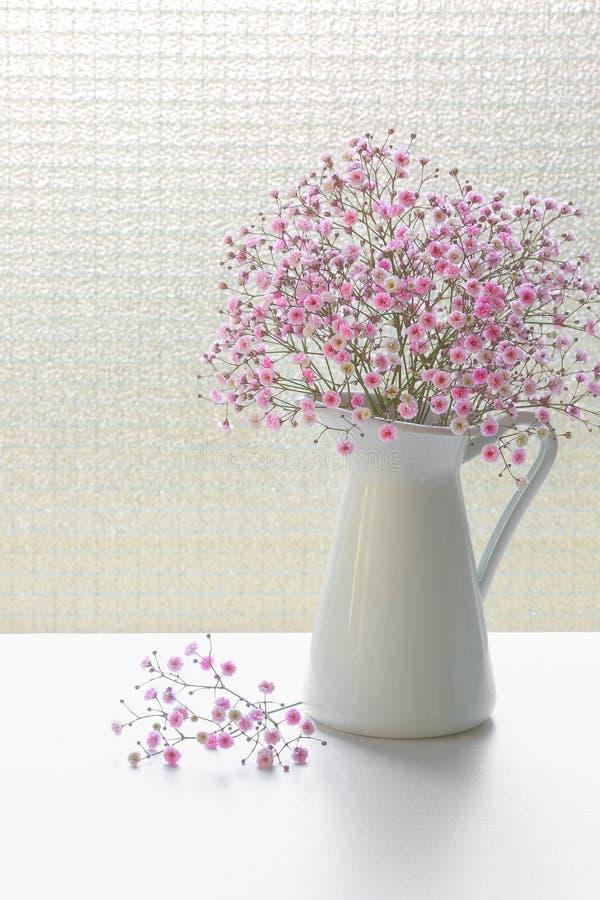 Den lilla rosa gypsophilaen blommar i den vita tillbringaren på en fönsterbakgrund fotografering för bildbyråer