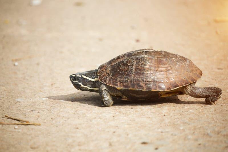 Den lilla sköldpaddan går på en konkret väg royaltyfria bilder