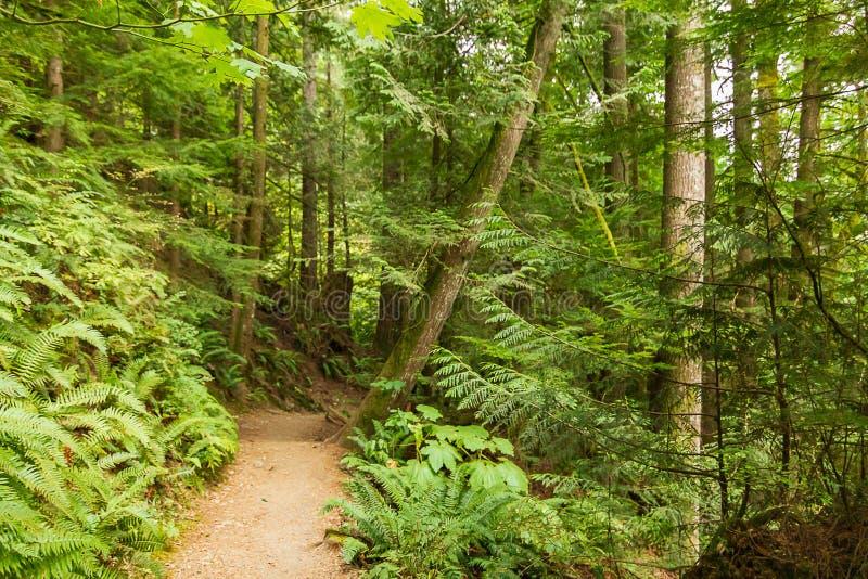 den lilla smutsvandringsledet leder till och med skog i august arkivbild