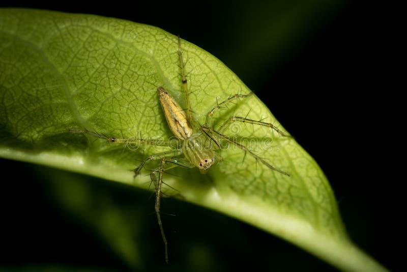 Den lilla spindeln fotografering för bildbyråer