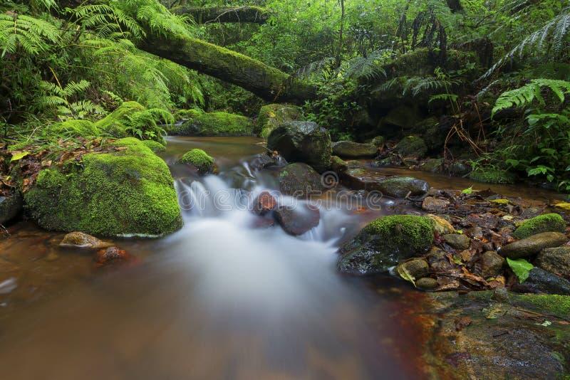 Den lilla strömmen i skogen som flödar till och med mossa täckte trädstubbar och, vaggar arkivfoto