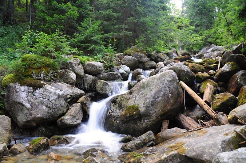 Den lilla vattenfallet med grå färger vaggar Grön trädbakgrund i skog, med trevliga färger flora och växter royaltyfria bilder