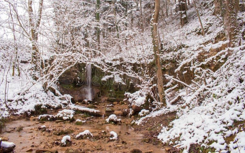 Den Linn vattenfallet i dentäckte skogen i vinter Taget nära Linn, Schweiz, i kanton av Aargau arkivfoto