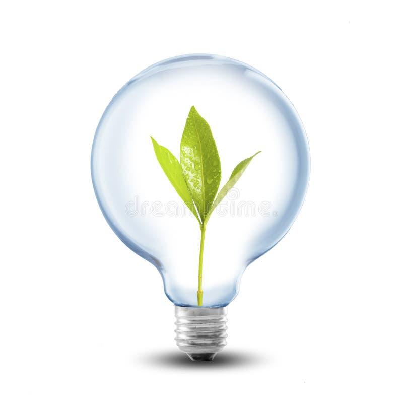 Den ljusa kulan med jord och den gröna växten spirar inom royaltyfria bilder
