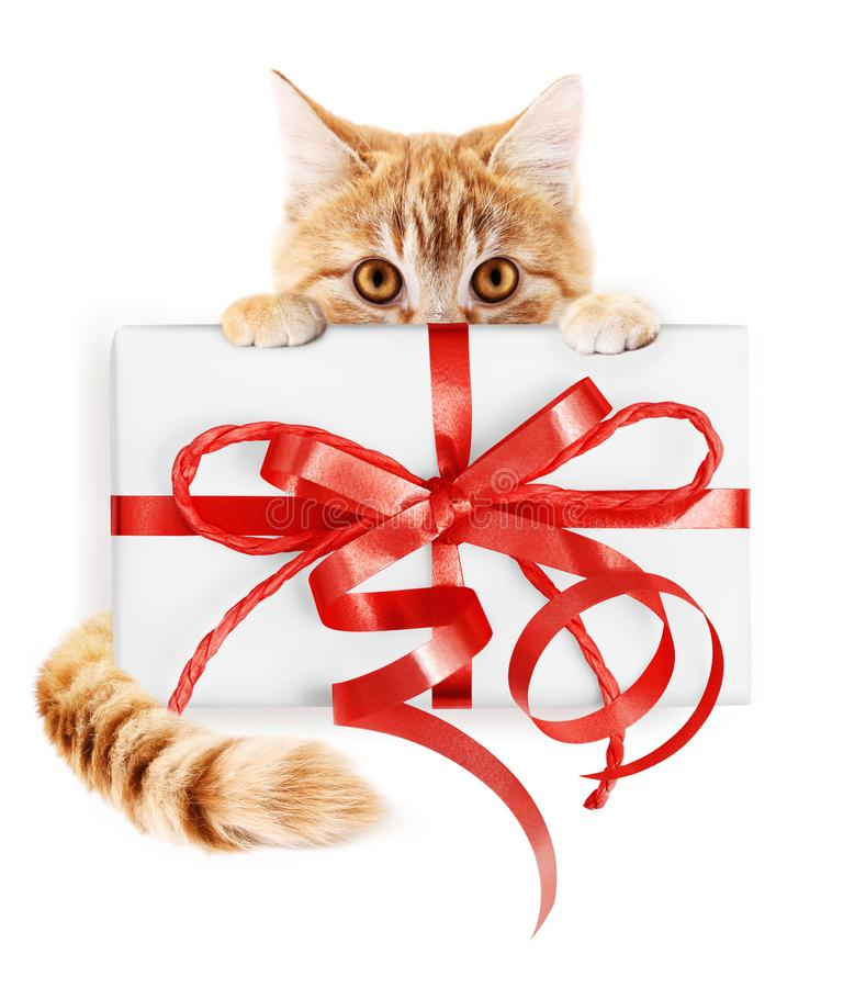 Den ljust rödbrun katt- och julgåvapacken med det röda bandet bugar, isolaen royaltyfria foton