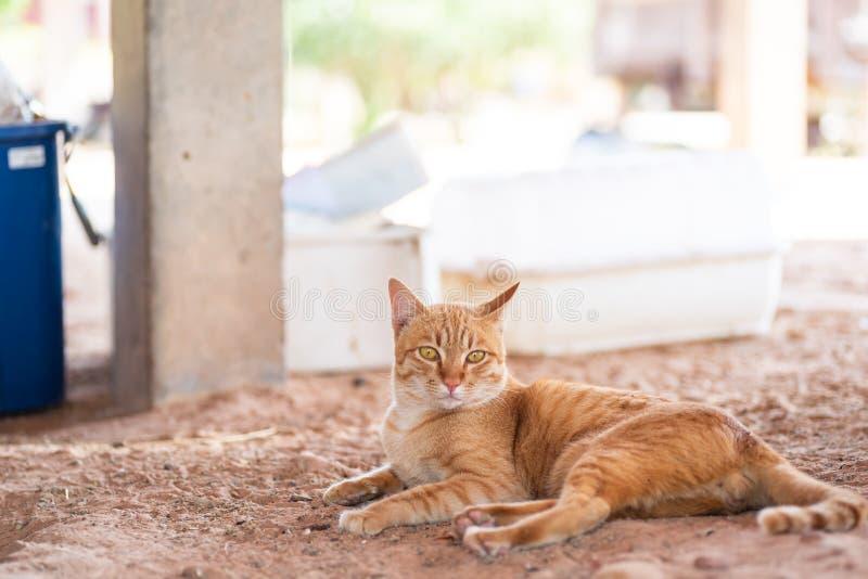 Den ljust rödbrun katten lägger ner på jordningen fotografering för bildbyråer