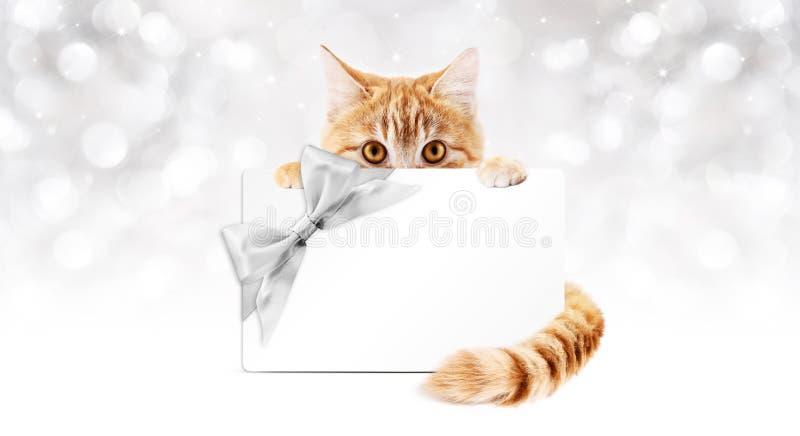 Den ljust rödbrun katten med gåvakortet och silverbandet bugar arkivfoton