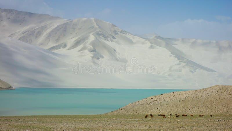 Den lugna vita sand sjön royaltyfri foto