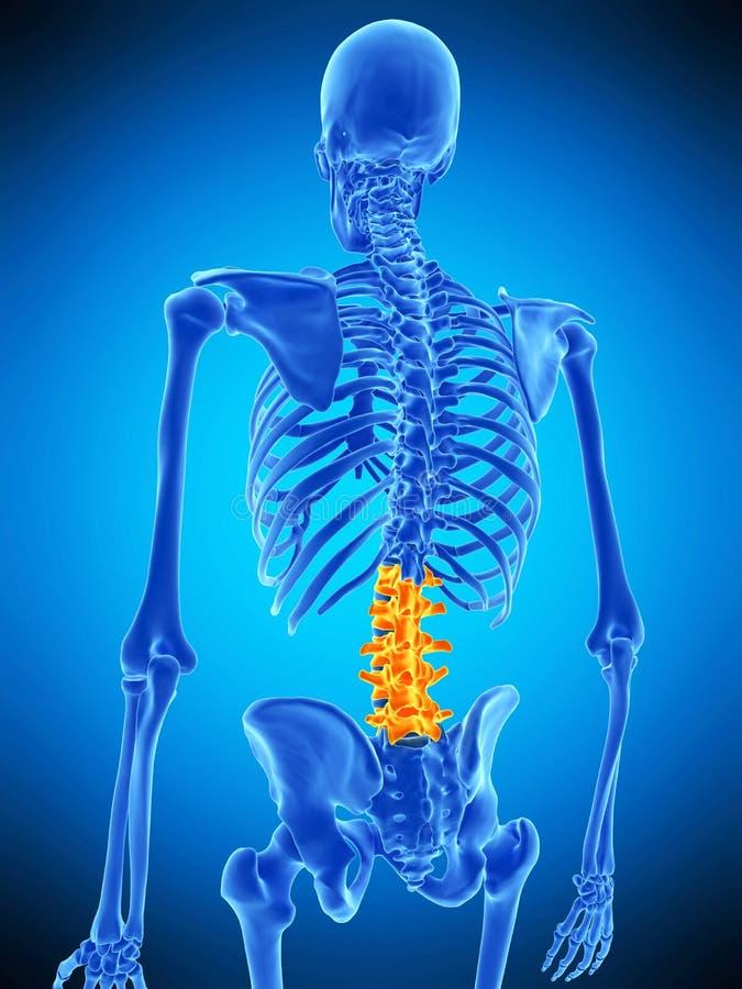 Den lumbala ryggen vektor illustrationer