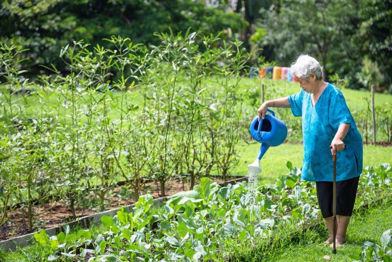 Den lyckliga asiatiska höga kvinnan som bevattnar växter med att bevattna kan i den organiska trädgården, åldring växer grönsaker royaltyfri foto