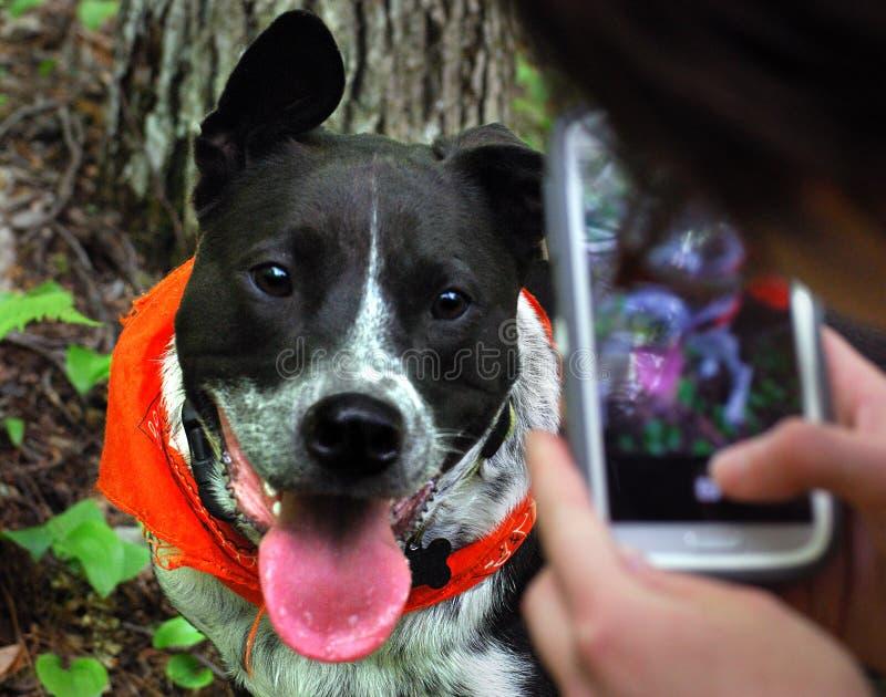 Den lyckliga hunden ler för mobiltelefonstående arkivbilder