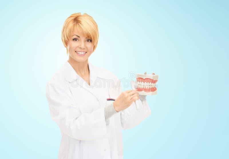 Den lyckliga kvinnliga doktorn med tandborsten och käkar modellerar royaltyfri bild