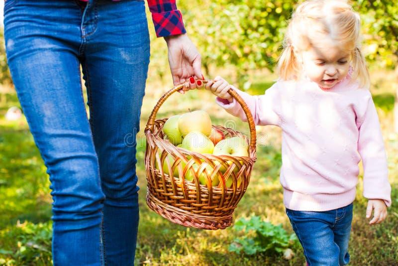 Den lyckliga le flickan med modern samlar äpplen arkivbild