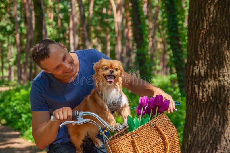 Den lyckliga mannen på cykeln med hans hund i korg och tulpan i parkerar royaltyfri foto